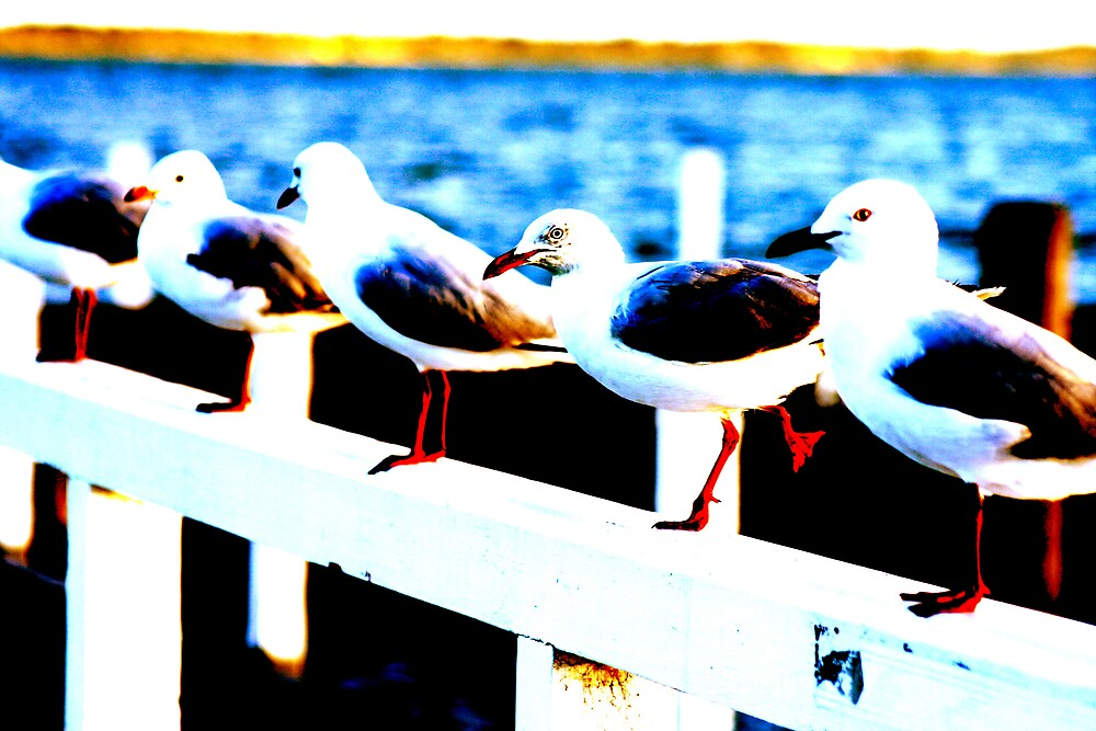 seagulls by Lisa Supple