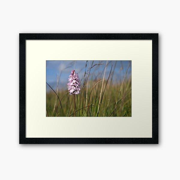 Spotted Orchid,  Portnoo, Co. Donegal Framed Art Print
