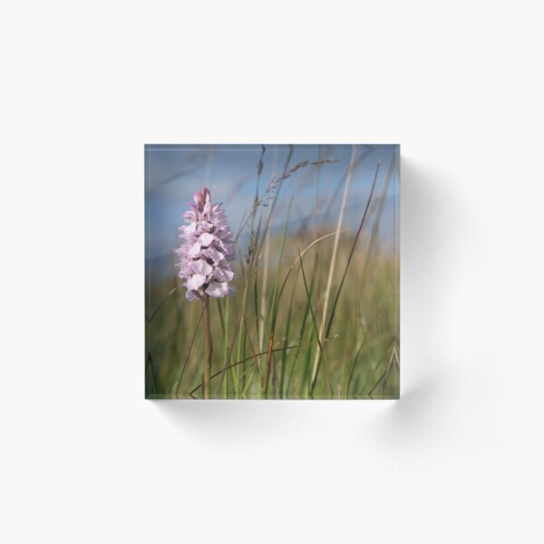 Spotted Orchid,  Portnoo, Co. Donegal Acrylic Block