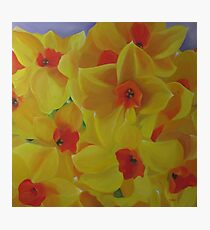Spring Fever Year-Round, Narcissus Photographic Print