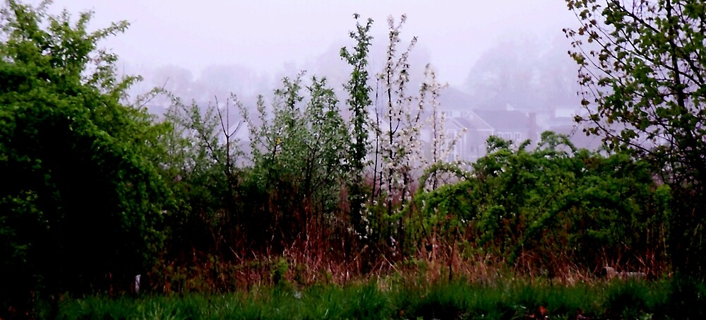 Hidden in the Mist by Judi Taylor