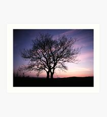 Two Trees embracing Art Print