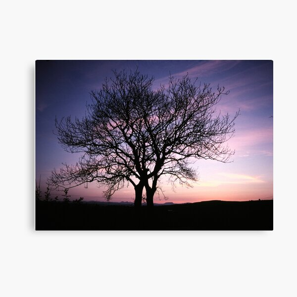 Two Trees embracing Canvas Print
