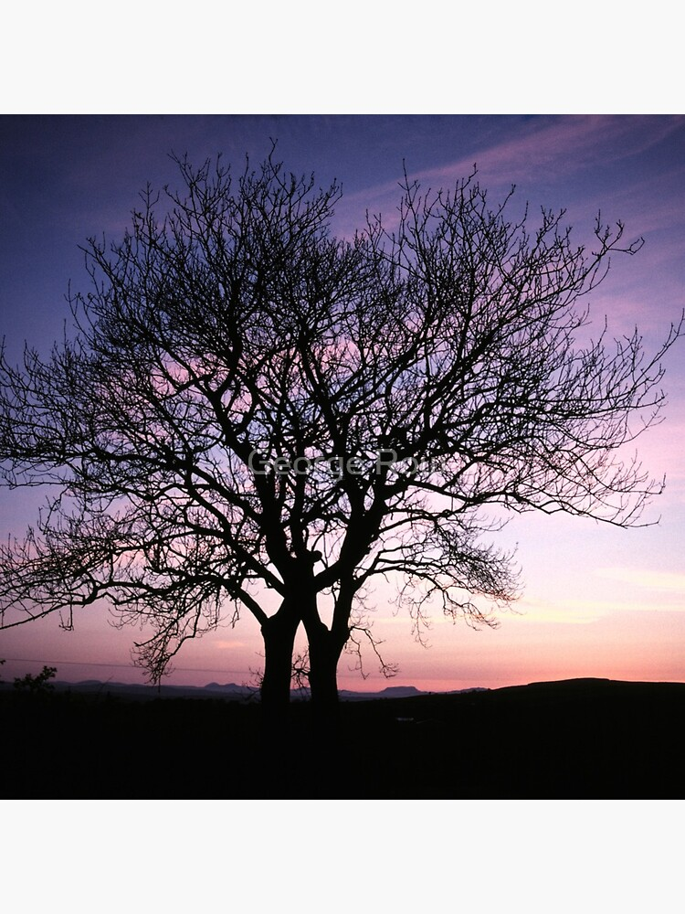 Two Trees embracing by VeryIreland