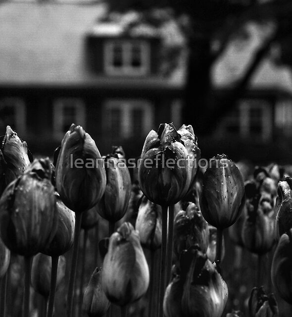 The dark spring by leannasreflections