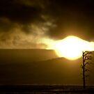 Desolate by Josh Dayton