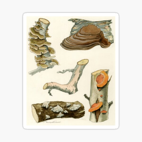 Wood Rots of Fruit Trees and Other Plants Sticker