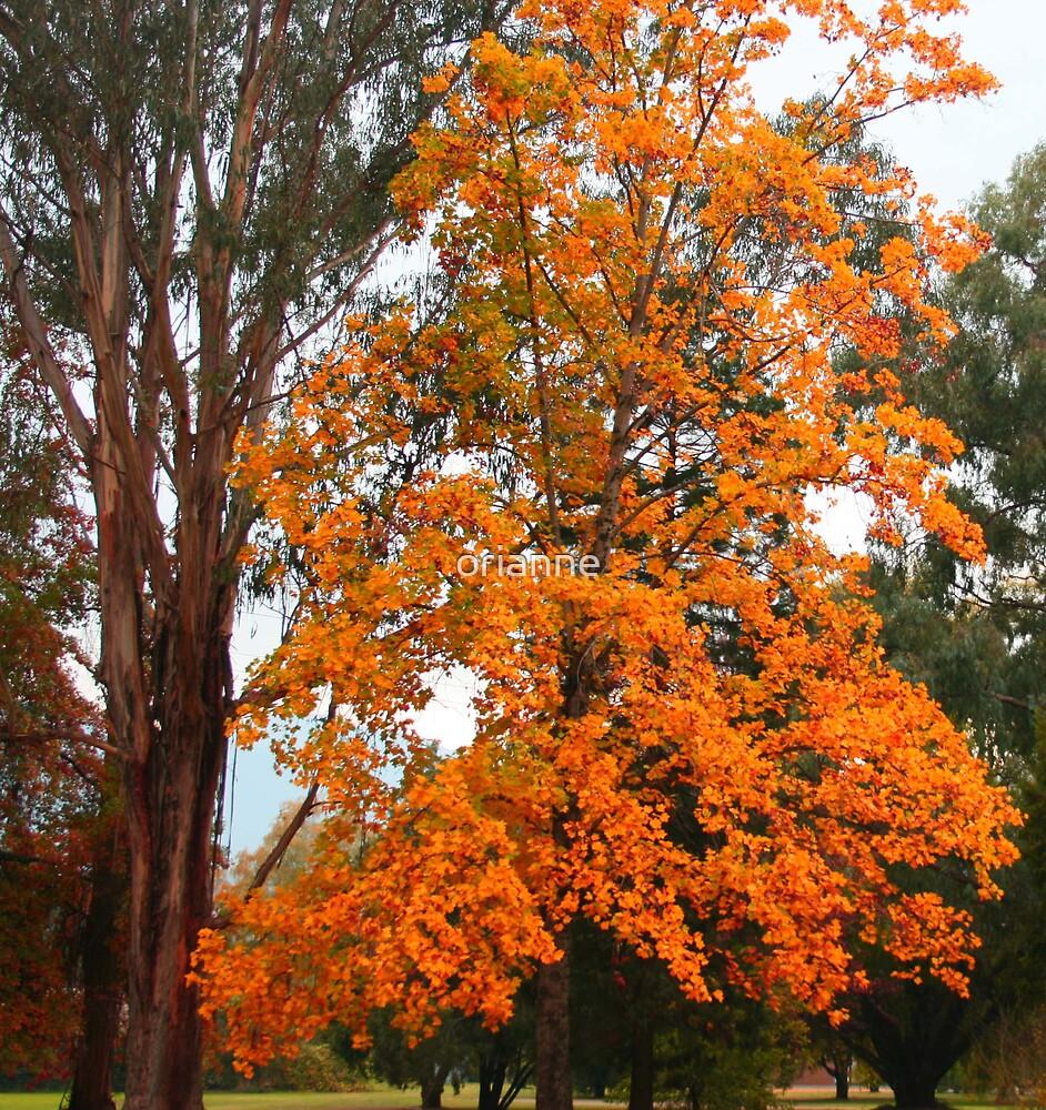 Orange Tree by orianne