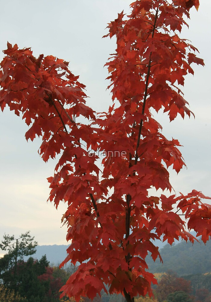 Red Tree by orianne