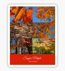 Sugar Maple n+2 Sticker