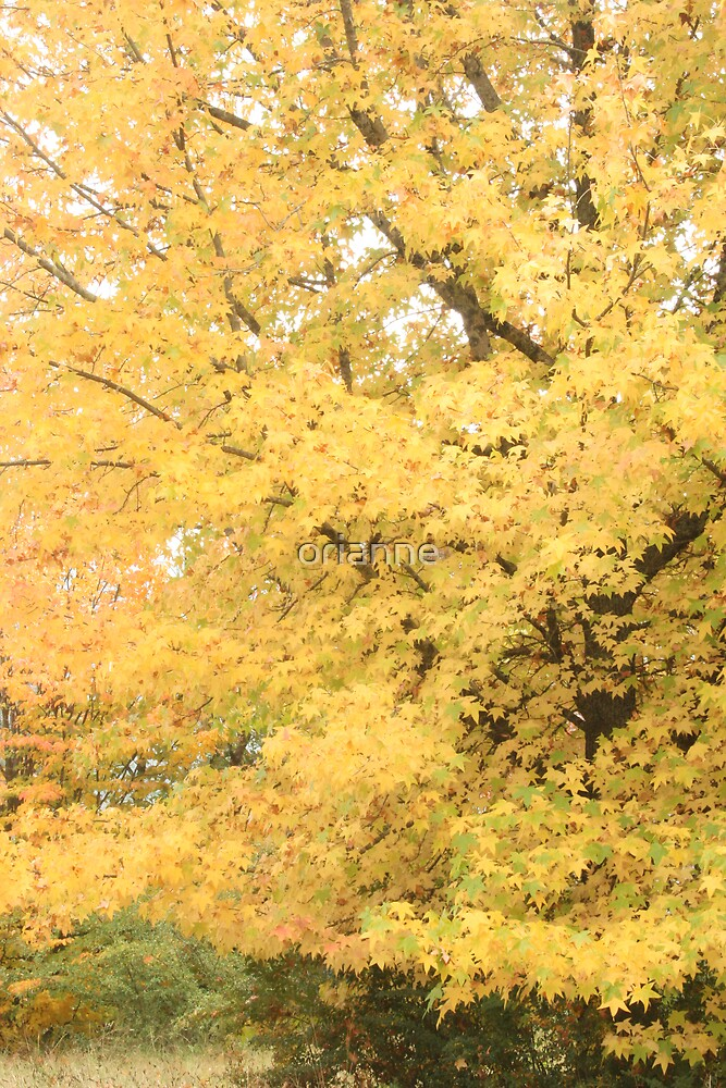 Yellow tree by orianne