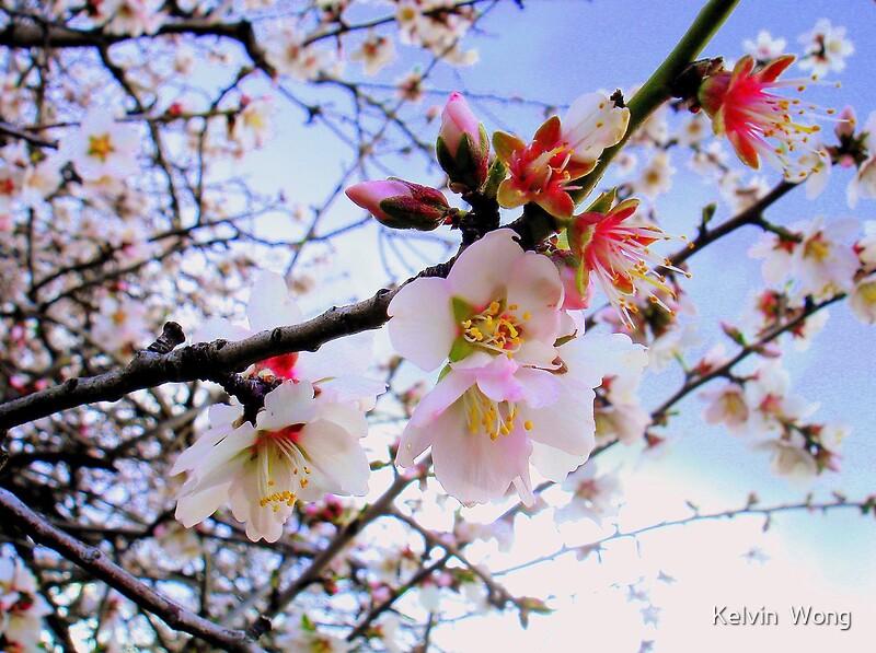 Открытка пролет