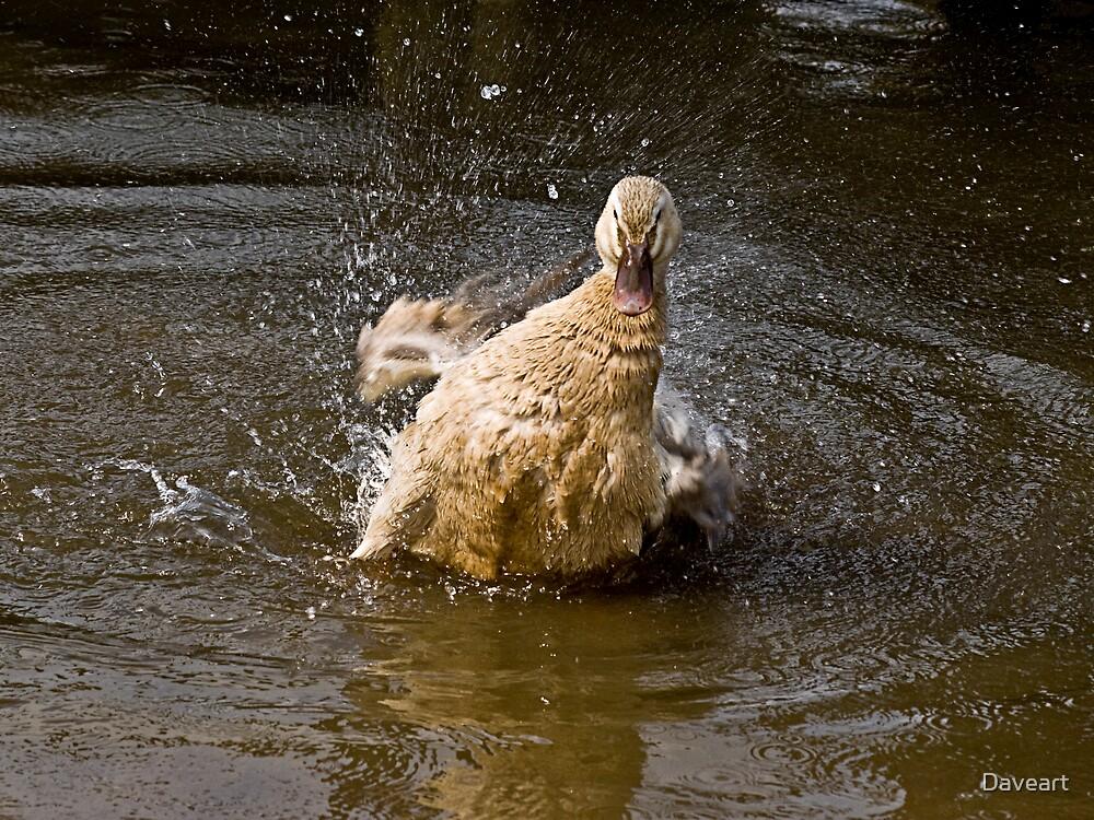 Having a splashing time! by Daveart