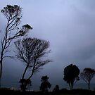 Storm at Coles Bay by Elana Bailey