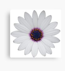 Simplistic Minimalist Flower Photography Canvas Print