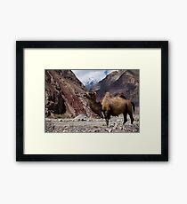 Camel on the Karakoram Highway Framed Print