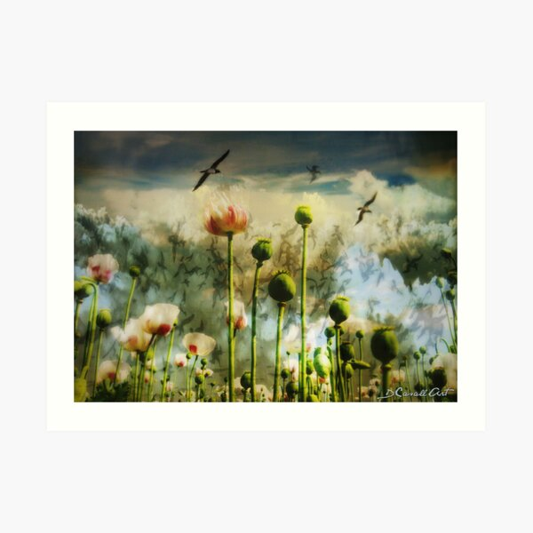 Let the flowers grow Art Print
