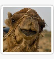 Camel close-up Sticker