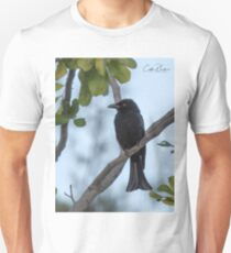 Spangled Drongo T-Shirt