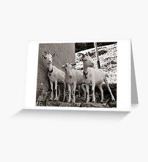 Three Goats Grußkarte