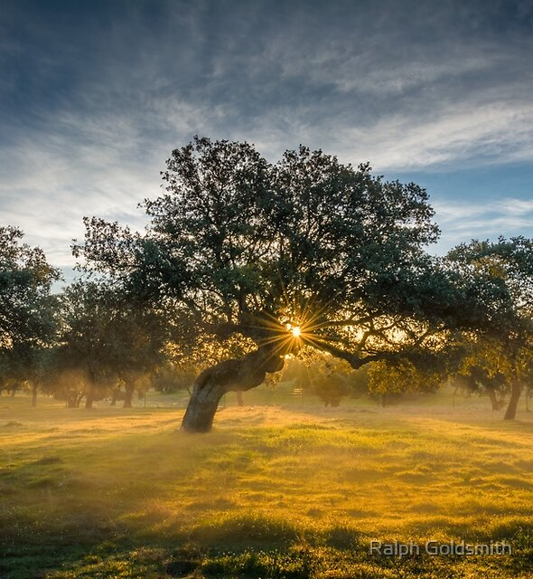 Sunrise, mist and trees in Andalucia  by Ralph Goldsmith