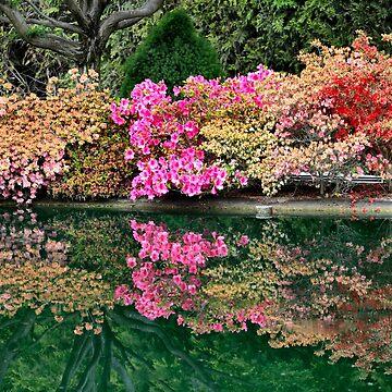 Cockington Green Gardens by Bami