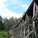 Noojee Trestle Bridge by David Thompson