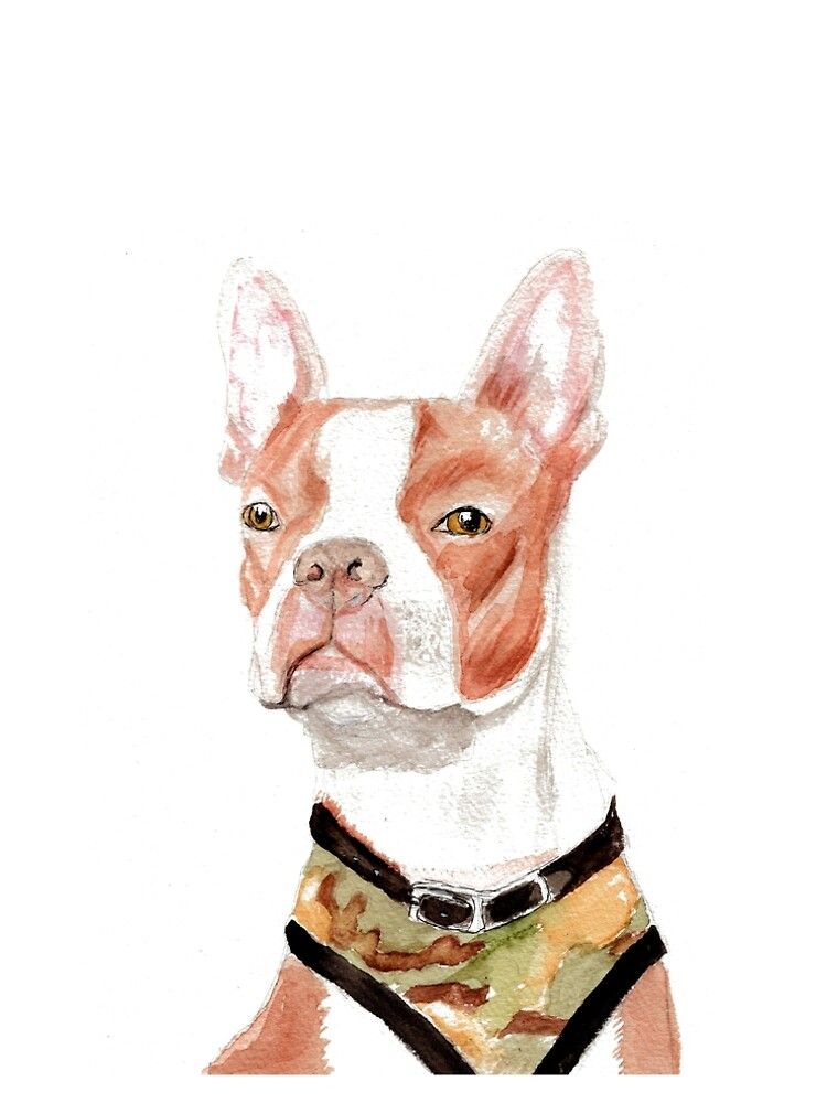 Portrait of a Boston Terrier by pjscribble