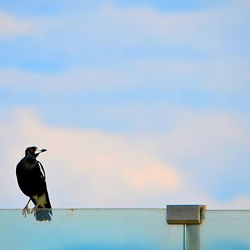 Magpie Sitting by Bami