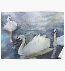 Royal Swans 1 Poster