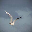 Free as a Bird by Kitsmumma