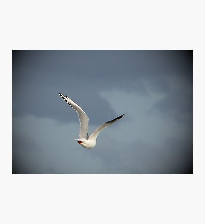 Free as a Bird Photographic Print