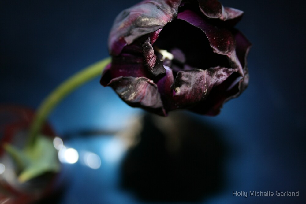 Purple Tulip by Holly Michelle Garland