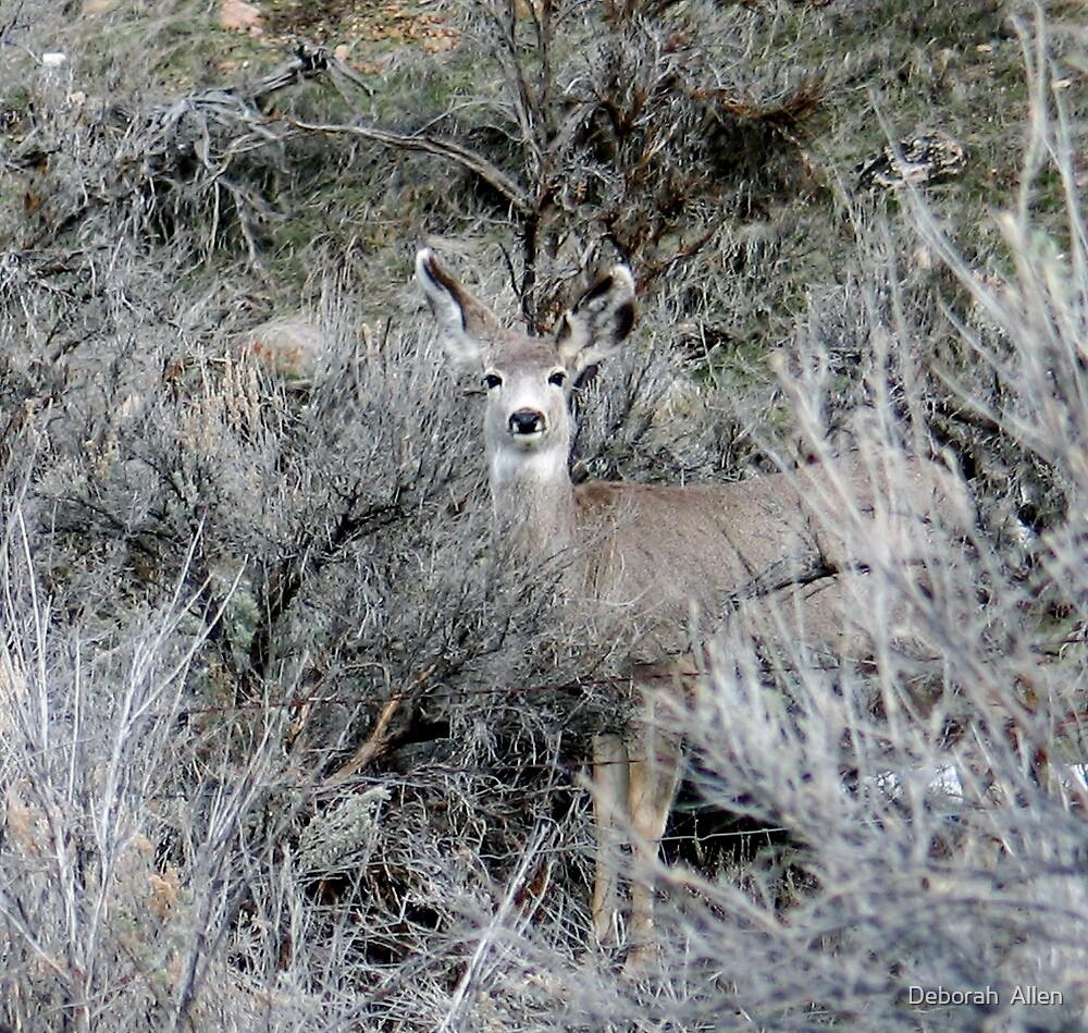 I Spy a Deer by Deborah  Allen
