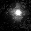 Moon Filter by Elizabeth Casswell
