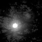 Moon Filter II by Elizabeth Casswell