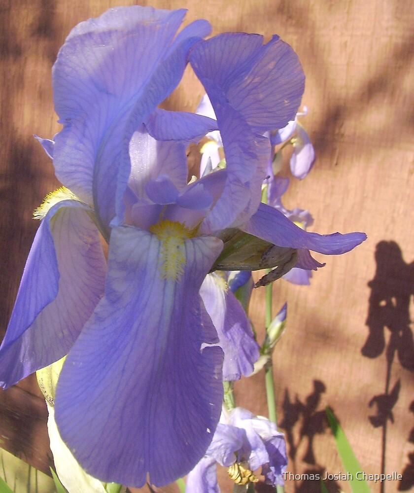 """Iris gonna tell you how pretty U R"" by Thomas Josiah Chappelle"