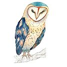 The colourful barn owl by Clare Kelly