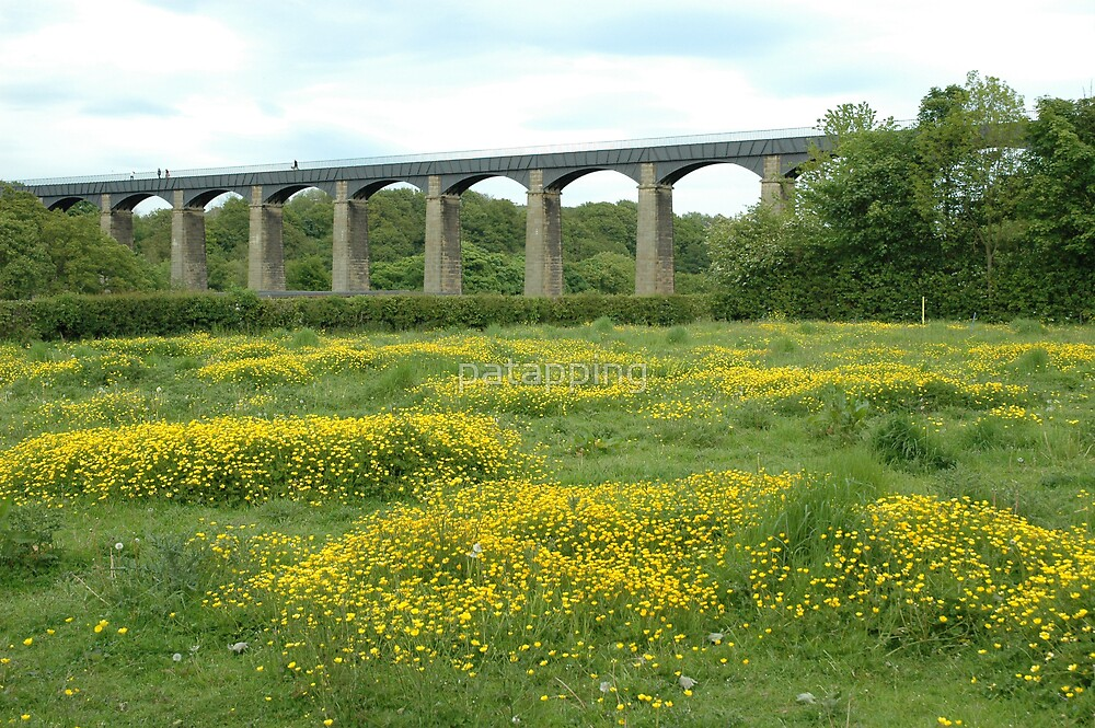 Buttercup Fields,Pontcysyllte, North Wales by patapping