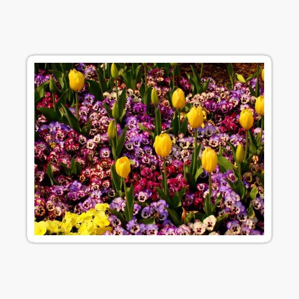 Tulips Among Pansies Sticker