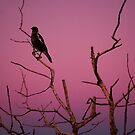 bird sunrise by Amagoia  Akarregi