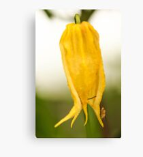 Yellow Flower and Insect Canvas Print