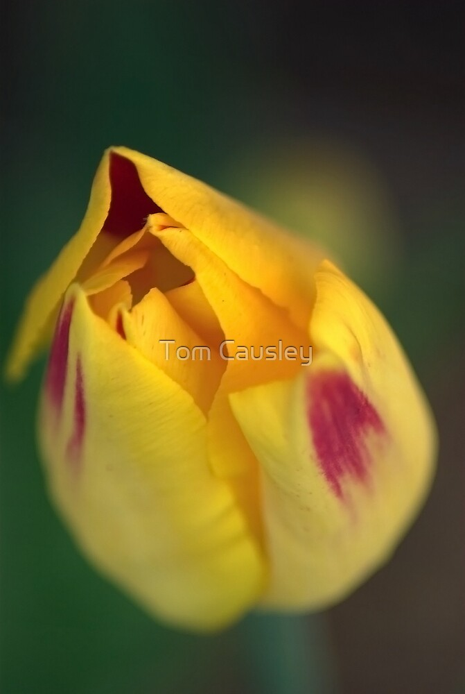 A New Day by Tom Causley