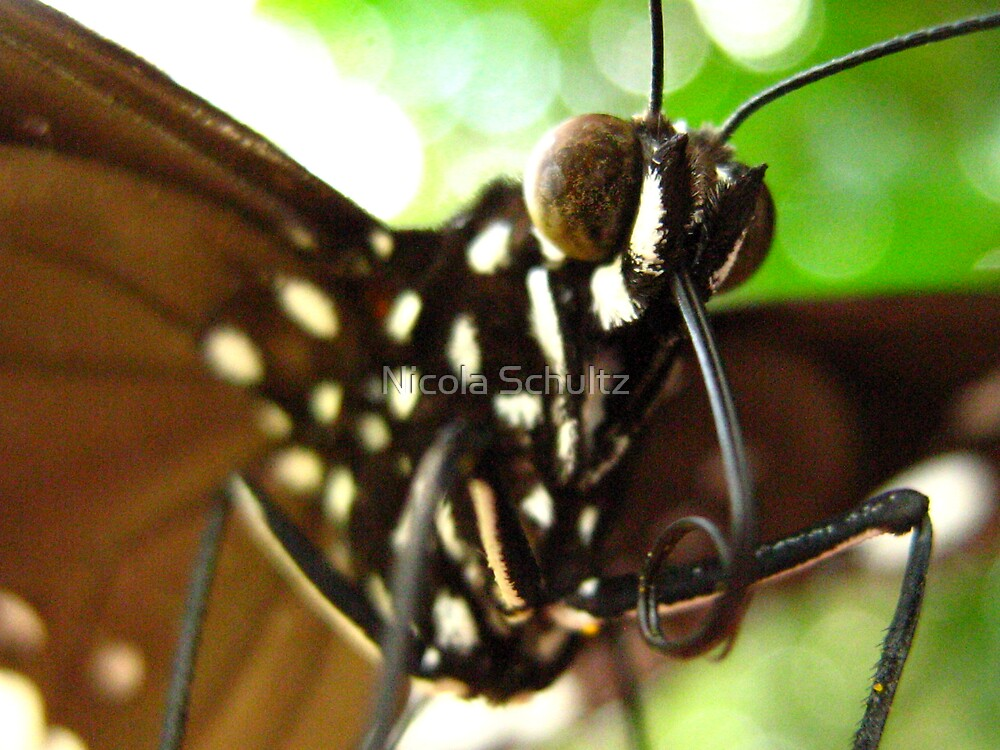 I've got wings by Nicola Schultz