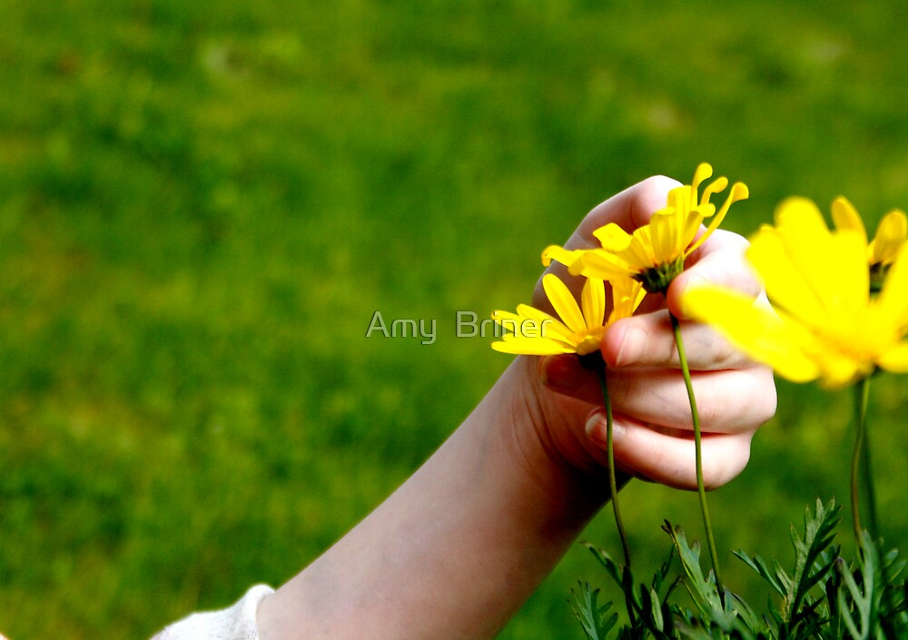 A Soft Touch by Amy  Briner