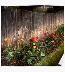 Tulips along a fence Poster