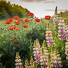 Lupins & Poppies by vivsworld