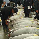 Tuna auction by Stephen Colquitt