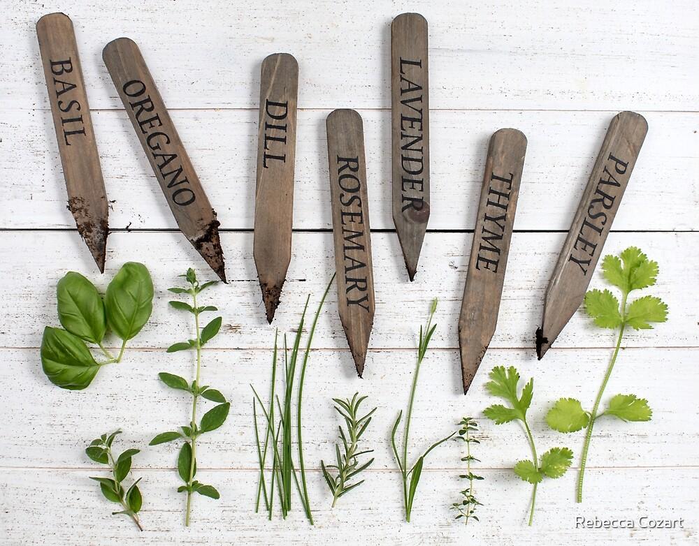 Herbs by Rebecca Cozart