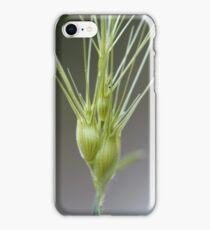 Ovate goatgrass (Aegilops geniculata) iPhone Case/Skin